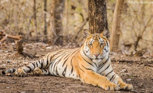 Pench-National-Park-Safari-Booking