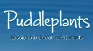 Puddle-Plants-Logo.jpg