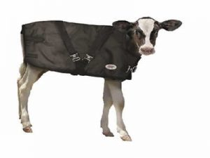 Calf-Blanket.jpg