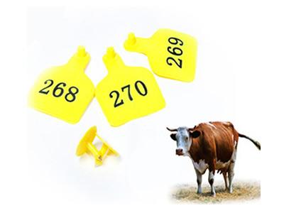 Cattle-Ear-Tags.jpg